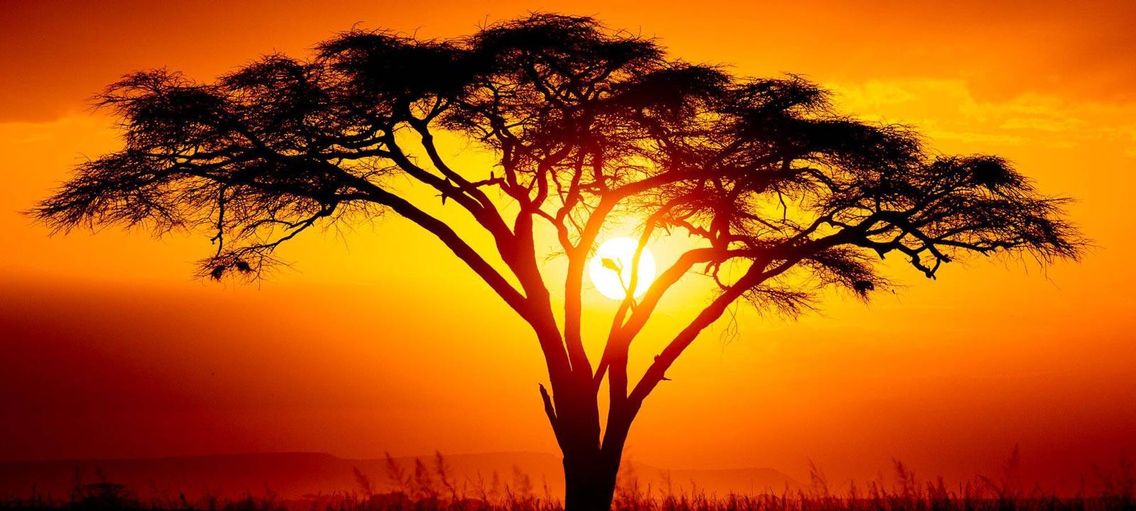 Pildiotsingu africa acacia tulemus